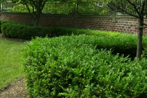 Tips for Planting Garden Beds