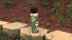 Three Ways to Control Bugs and Insects - Ace Hardware