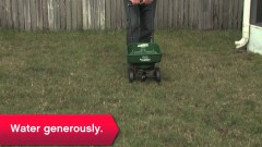 Three Ways to Rescue Lawn - Ace Hardware