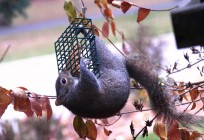Bird Feeding - 3 Tips on How to Get Started