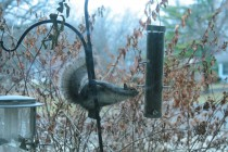 BirdFeeder.Squirrel (1)