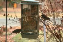 BirdFeeder.SquirrelResistant (39)