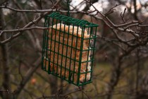 A simple suet cage feeder attracts all kinds of birds.