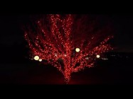 How-to-Choose-the-Right-Holiday-Lights-Ace-Hardware