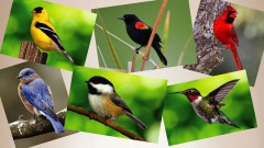 How-To-Attact-Backyard-Birds-Ace-Hardware