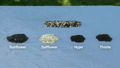 How-To-Pick-The-Right-Bird-Seed-Ace-Hardware