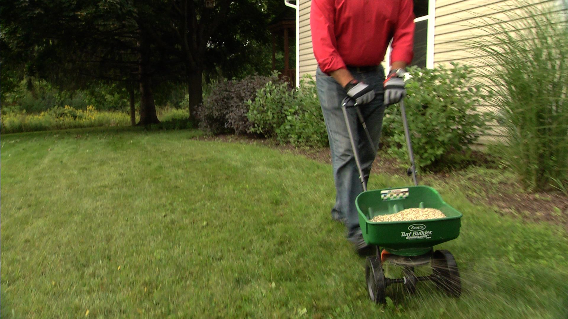 How To Overseed Your Lawn Ace Tips Amp Advice