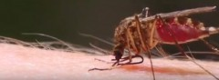 How to Keep Mosquitos Away